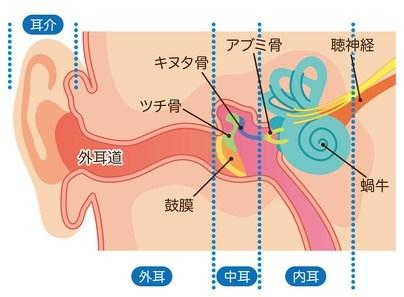 中耳炎の原因
